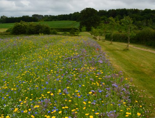 Flower Power and AD: Maintaining Biodiversity